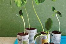 Herbs / How to grow veggies...