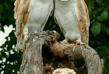 Just Love Owls