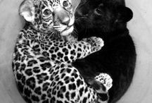 Big Cats / by Connie Calheta