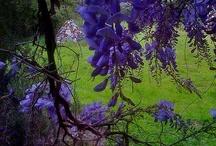 purple / by Colleen Hosler