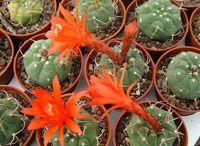 flori&plante deosebite
