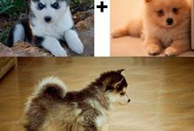 love pet love