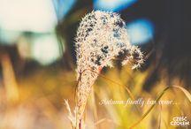 Nature in autumn / More photos: www.czescczolem.pl // Film ślubny i fotografia ślubna w kinowym stylu!