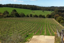Amazing Vineyards & Wineries, Mornington Peninsula