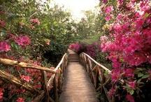 Secret Garden shoot
