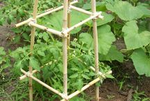 Gardening -vege
