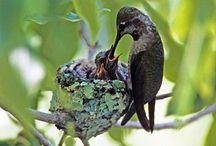 Birds / by Linda Payne
