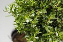 healthier plants.