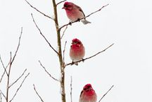 Birds of a Feather... / by Diane Duitsman
