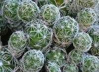 pozsgások és kaktuszok