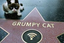 GRUMPY CAT's Real Name is: TARDAR SAUCE / •I like Tardar, funny Grumpy Cat & her memes are hilarious…LOL XD•