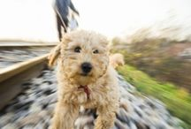 ULVH Pet Training & Behavior / We are committed to humane and gentle training methods that will quickly and easily get your dog to perform the desired behavior and respond to a variety of commands willingly.
