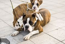 Dogs / by Kira Klitch
