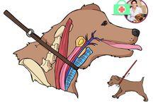 Hunde Erziehung und Gesundheit