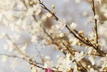 Tavasz-Nyitnikék