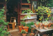 Garden Life / Ideas and inspiration that influence my outside spaces.