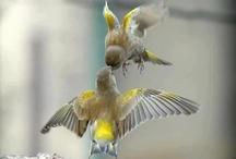 Hummingbird / Hummingbirds