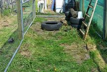 """Chicken Run / Cheap chicken run, price breakdown - 6 6'x4"""" fencing posts - £18 Green Mess 10m roll - £22 5 Harris panels - £20 new £8-10 2nd hand Bag of cable ties - £3  Its a work in progress, used the 5th Harris panel to close of 1 end, (also closes 2nd run beside, using the other 4m of mess to cover this, a later project, could of used full 10m to cover from ground right over to other end"""