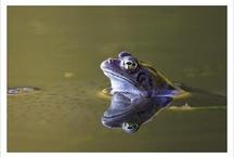 Pond animals / Billie Bowbrick, class 7J
