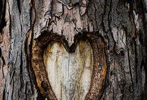 Au coeur de la nature
