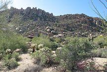 25437 N 113th Way, Scottsdale Arizona