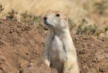 South Dakota Wildlife