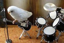 Bird is the Word / by Laura Hetrick