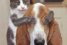 Cats and dogs / by Marge Mckenzie