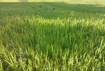 La filiera: dal grano alla farina