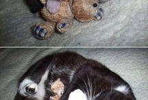 Cute... Animals