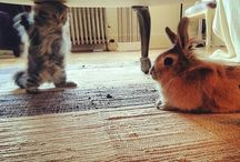 Kittens and bunnys