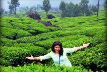 best Ayurvedic Resorts in Munnar