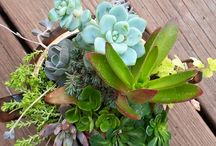Blooming Alchemy Succulent & Floral Decor / Specializing in succulents and wildflowers, Kim creates bold and one-of-a-kind floral arrangements to augment your home or your special event.