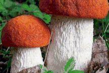 грибы / о грибах