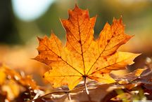 Autumn Inspiration / Everything Autumn. Think warming sweet, yet nutty spices like cinnamon and nutmeg, Warm amber tones and deep chestnut browns.