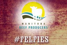 Manitoba Beef Producers / Love your food? Meet your Canadian Beef farmers in Manitoba