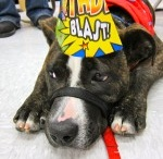 Happy Paws Turns 1! / Happy Paws Rescue celebrated its first birthday in April 2012.