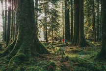 PNWonderland - Adventures in Washington / The best ideas for enjoying the outdoors in and near Olympic National Park