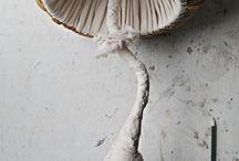 Чудо-грибы