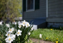 Gardening / Gardening tips and ideas for your home, to add outdoor enjoyment and curb appeal.