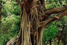 Trees / Best friends