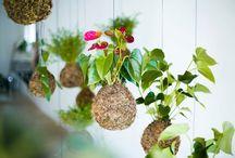 Jardim ♥  Decoração / Imagens de Jardim para residências, sugestão e inspiração de jardim suspenso, jardim vertical e muito mais!