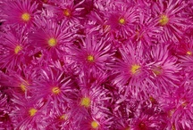 Color Inspiration: Fuchsia / by JOBY Inc