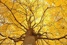 Yellow as in sunlight