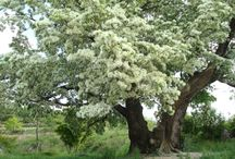 나무 이름