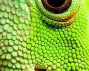 bord dieren textuur  2014 / dieren