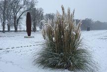 Les Jardins sous la neige / Quand les iris laissent place à la neige !