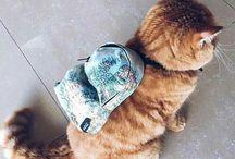 a n i m a l s | kitties