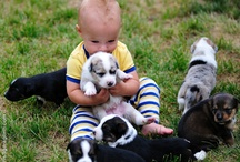 Puppies! / by ducduc