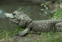 Reptiles y anfibios / Noticias curiosas e interesantes sobre los #reptiles de todo el mundo  Animales  Naturaleza